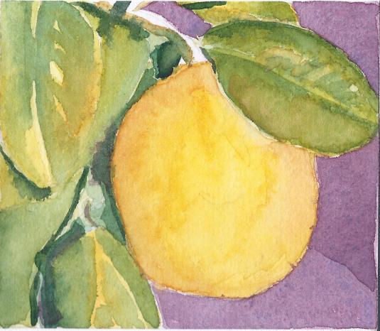 TC48 Meyer Lemon Ripe to Pick