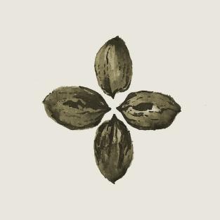 rice-p-pecan-motif