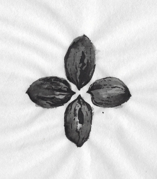 rice-pecan-motif
